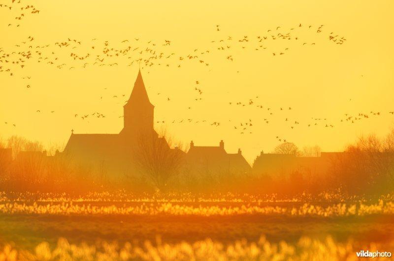 Natuurreservaat Uitkerkse Polders